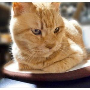 週休三日の私と週休六日のモフ猫