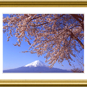 河口湖畔の桜