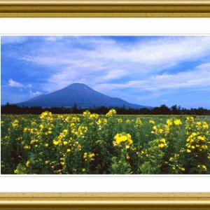 富士には月見草がよく似合う