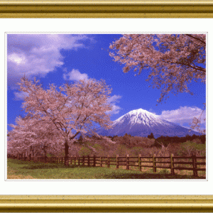 富士山麓の桜もそろそろ最終盤
