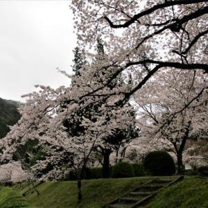 下北山村きなりの郷の桜