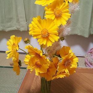 お花とか梅の実とか