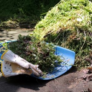 雑草対策(雑草の種類,予防,道具) ~ マルチから天然除草剤まで