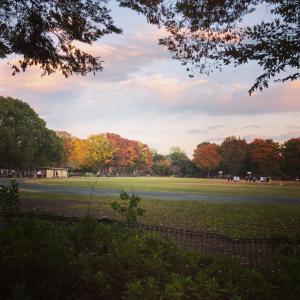リハビリ帰りに紅葉が始まった公園をまだ明るいうちに散歩してきました