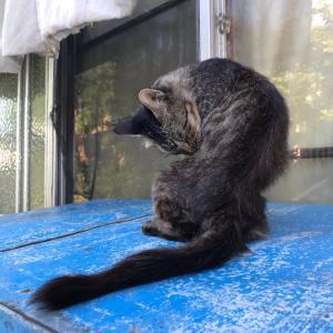 小樽からまた猫が来たよ。