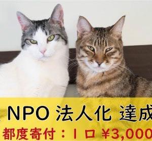 目指せ認定NPO法人化!