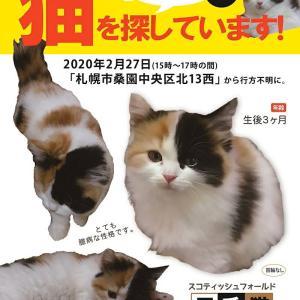 《ぽんず》の安否が知りたい!〜迷い猫探し〜
