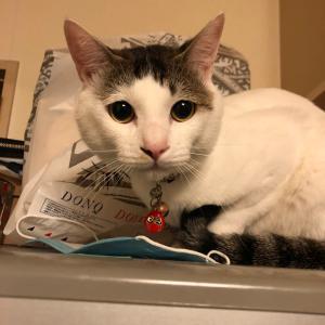 迷い猫探し《アル君》札幌市豊平区平岸。