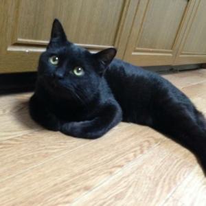 迷い猫探し✴︎チビはどこに?✴︎手稲区