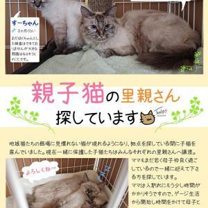 モフ子とすーちゃん仲良し母娘の家族探し。