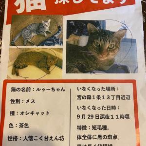 迷い猫探し《ルゥーちゃん》《札幌市市中央区宮の森》