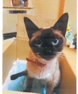 迷い猫探し◯みかんちゃん◯を探していますー札幌市東区