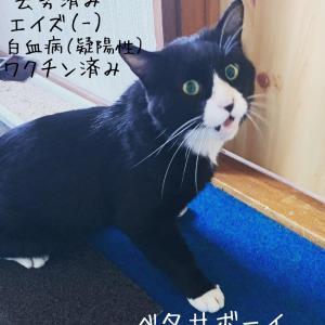《札幌》《ツキネコカフェ》《キトピロ》捜索しています。