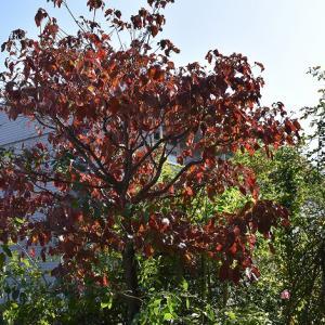 秋の気配と 青空のレッドエデン!