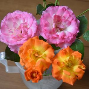お盆の頃に バラの切り花!