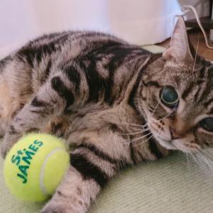 飼い主の不在が猫に与える影響?