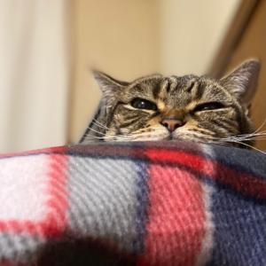 きれい好きな猫のトイレに関する尊厳の守り方