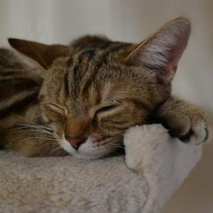 食べること寝ること