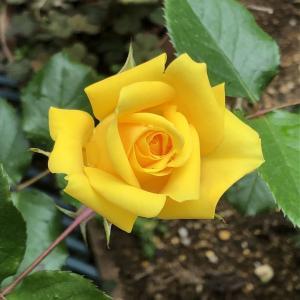 令和最初の『会長の花壇』