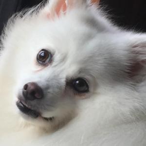 愛犬画像をお借りしての お直し画像