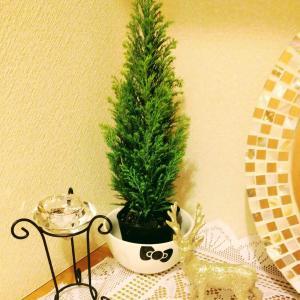 玄関をクリスマス仕様にしました🎄ゴールドのトナカイがやってきました🦌