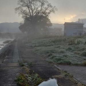 11月9日 朝の散歩