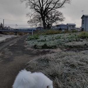 朝の散歩 12月1日