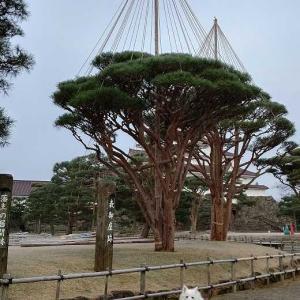 朝の散歩 鶴ヶ城