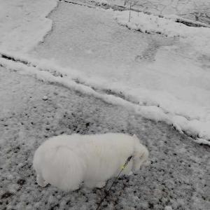 目が覚めたら雪景色