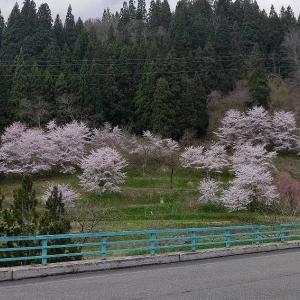 4月26日 柳津町へ