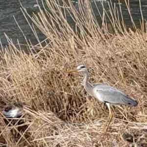 なんだこの鳥、初めて見る。