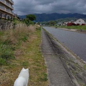 5月6日 午後の散歩 いつもの反対側