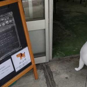 犬にやさしい町 柳津町