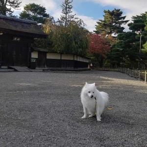朝の散歩、秋の鶴ヶ城