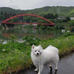 柳津町の散歩