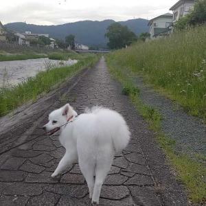 サマーカット後の散歩
