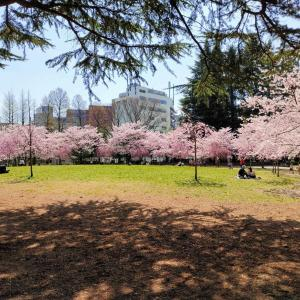桜色の幸せ♡