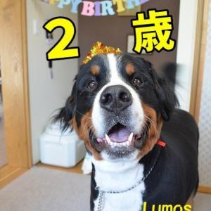 ルーちゃん2歳の誕生日!