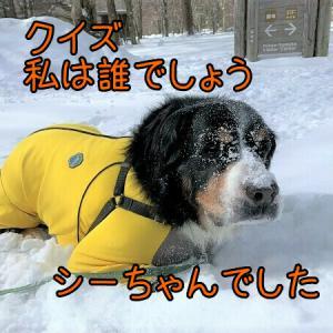 1週間前だけどまた雪遊びラッセルラッセルしてきたネタ