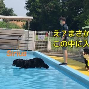 プール行ったよ♪果たしてルーちゃんは泳げるのか?