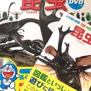 【図鑑】小学館の図鑑NEO 『昆虫』とNEO POCKET『昆虫』到着!