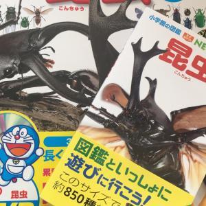 【図鑑】やっぱりくいついた!昆虫図鑑!家庭学習には必須な要素