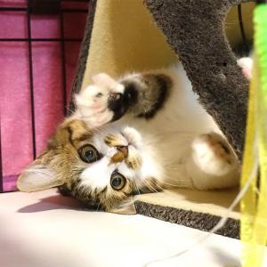 近況報告:部屋と転職と猫