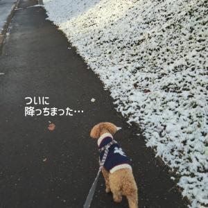 冬ときなこがきた1日