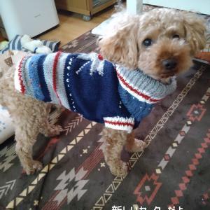お揃いのセーター