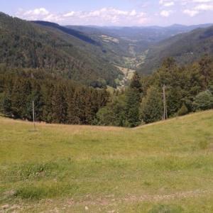 週末は山で野生のいちごを摘み