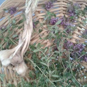 野生の大蒜、タイム、セントジョンズワート
