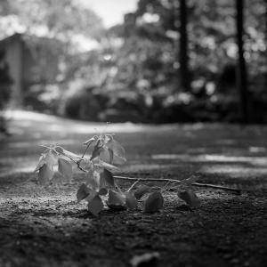 初夏の光蜥蜴が潜む枝