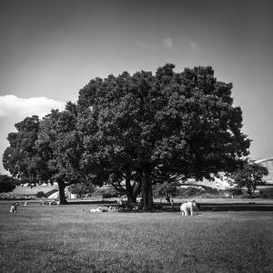 象より高い木
