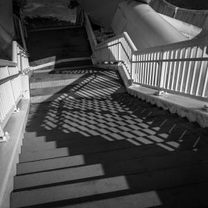 ナミナミヒカリトカゲを宿す階段
